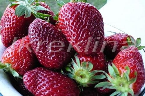 Сорт клубники урожайная с фотографиями и описанием